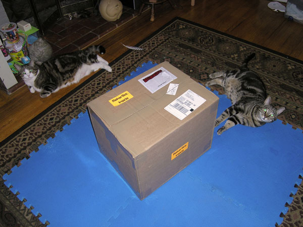 """Open the box already, human!"""